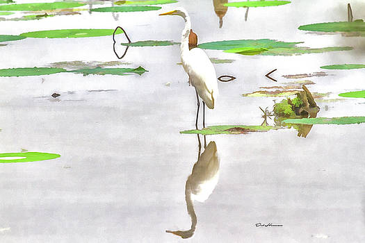 Reflections of a Great Egret by Deb Henman