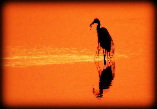 Reflections of a Heron by Suzanne DeGeorge