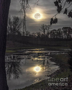 Reflections of a Super Moon by Lori Ann  Thwing