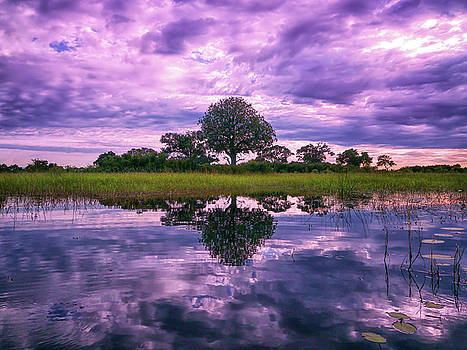 Reflections of Africa by Cheryl Ramalho