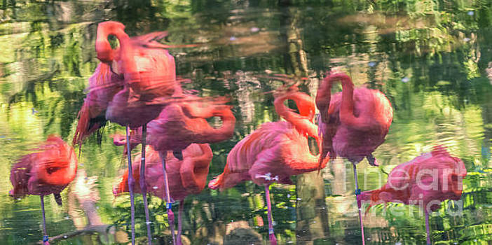 Reflections of Flamingos by Edie Ann Mendenhall