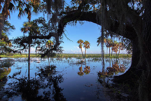 Patricia Twardzik - Reflections of Florida