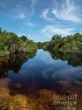 Reflections of nature by David Lane