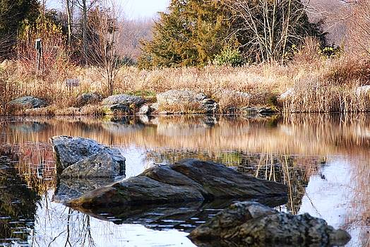 Reflections of Thanksgiving by Peter  McIntosh