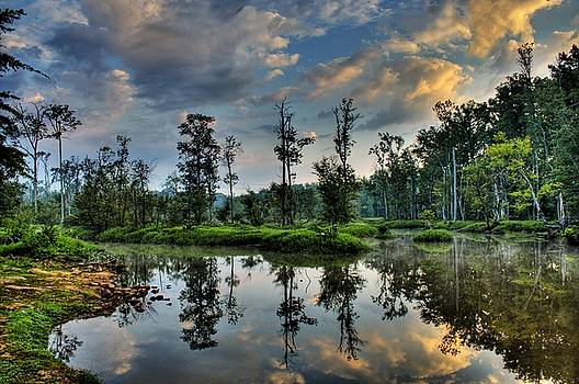 Tim Wilson - Reflections of The Morning