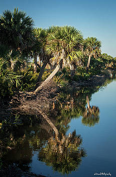 Reflections Of The Palm  by Debra Forand
