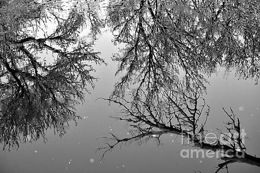 Reflections of winter by Laurie Wilcox
