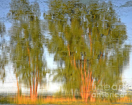 Reflections On Willow Pond by Kathy M Krause