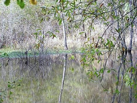 Reflections by Susan Anderson