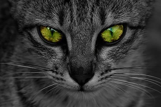 Reflective Cat Eyes by Ramabhadran Thirupattur