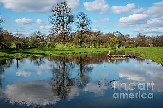 Reflective world. by Andy Bradley