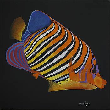 Regal Angelfish by John Edebohls