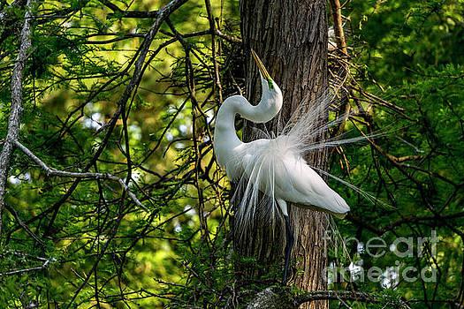 Regal Egret by Myrtle Beach Days Collection