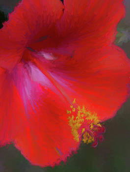 Regal Red Hibiscus  by Kathy Clark