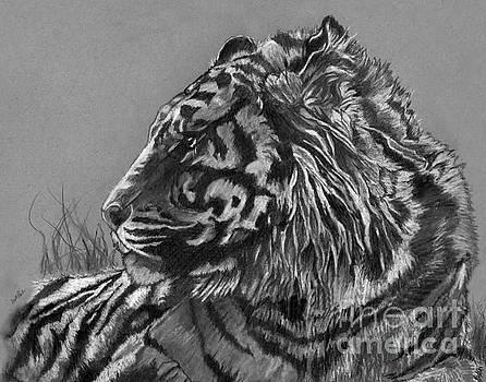 Regal Tiger by Scott Parker