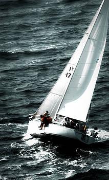 Regatta Sailboat Races by Sandy Buckley
