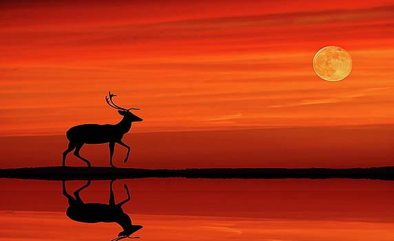 Reindeer by Moonlight by Andrea Kollo