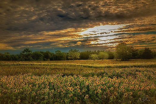 Sunflower Salute by J Thomas