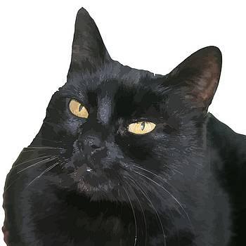 Tracey Harrington-Simpson - Relaxed Black Cat Portrait Vector Isolated