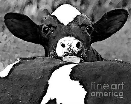 Relaxing Holstein Calf by Kathy M Krause