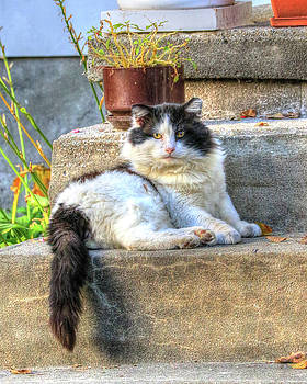 Relaxing on the Stairs by J Laughlin