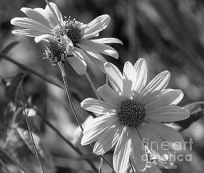 Remnants of Summer  by Janice Westerberg