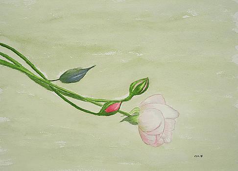 Renoir's Rose - Left Bank, Paris by Cynthia Schoeppel