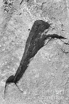Reptile shape shadow by Kiran Joshi