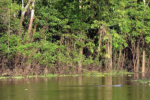 Harvey Barrison - Reserva Nacional Pacaya Samiria and its Amazon Pink River Dolphin