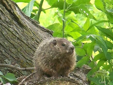 Resident Hedgehog by Julie Grace