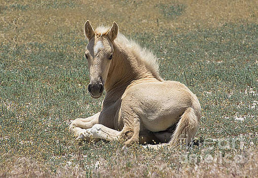 Resting Filly by Nicole Markmann Nelson