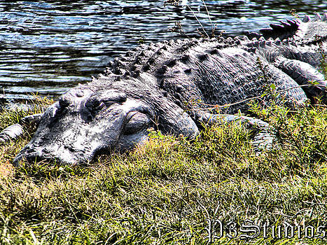Resting Gator by Corvus Alyse