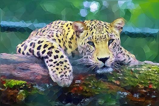 Resting Leopard by Azat Widken