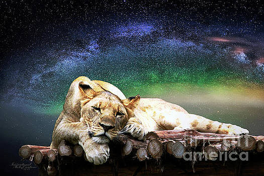 Resting Lion by Inspirational Photo Creations Audrey Woods