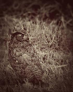 Resting Owl by Karen Fowler