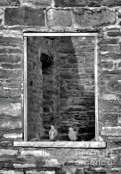 Resting Spot by Kristi Beers-Mason
