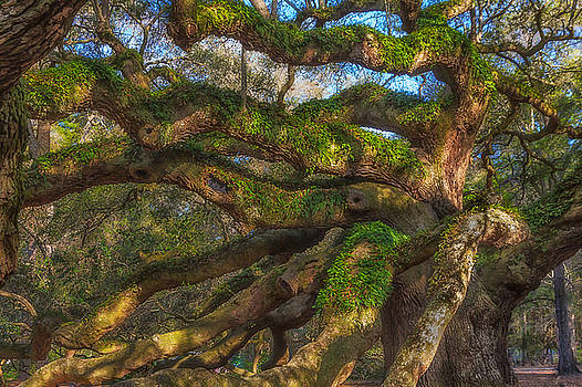 Resurrection Fern dons Angel Oak by Patricia Schaefer