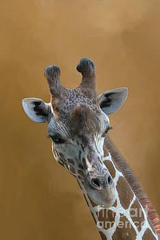 Reticulated Giraffe #4 by Judy Whitton