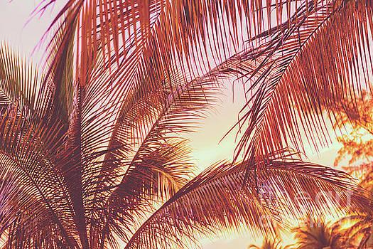Tim Hester - Retro Sunset On Palm Trees