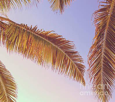 Tim Hester - Retro Tropical Palm Tree Background