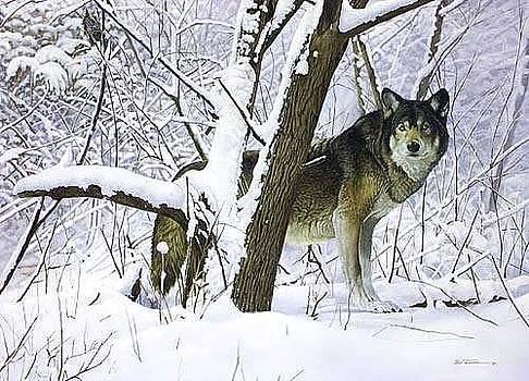 Return of the Hunter by Bob Travers