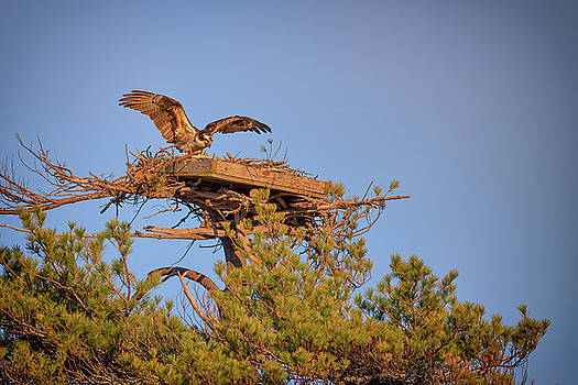 Returning to the Nest by Rick Berk