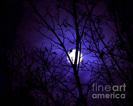 Reverie Moon by Janelle Tweed