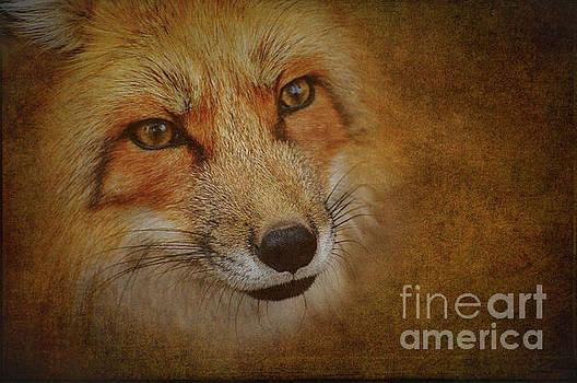 Heiko Koehrer-Wagner - Reynard the Fox