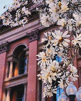 RH with magnolias by Brian McWilliams