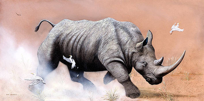 Rhino by Don Griffiths
