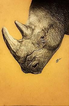 Rhino by Gilca Rivera