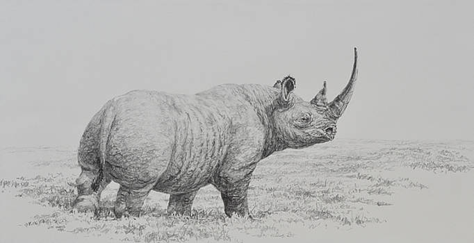 Rhino by Jim Young
