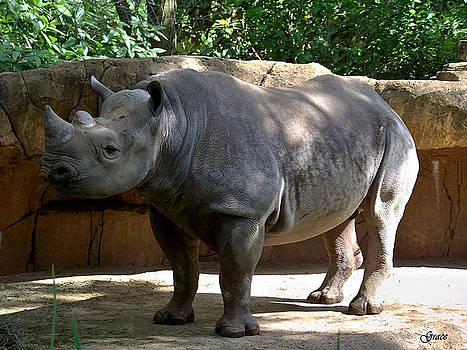 Rhino by Julie Grace