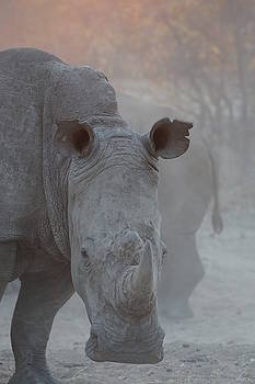 Rhino photo by Alison Nicholls